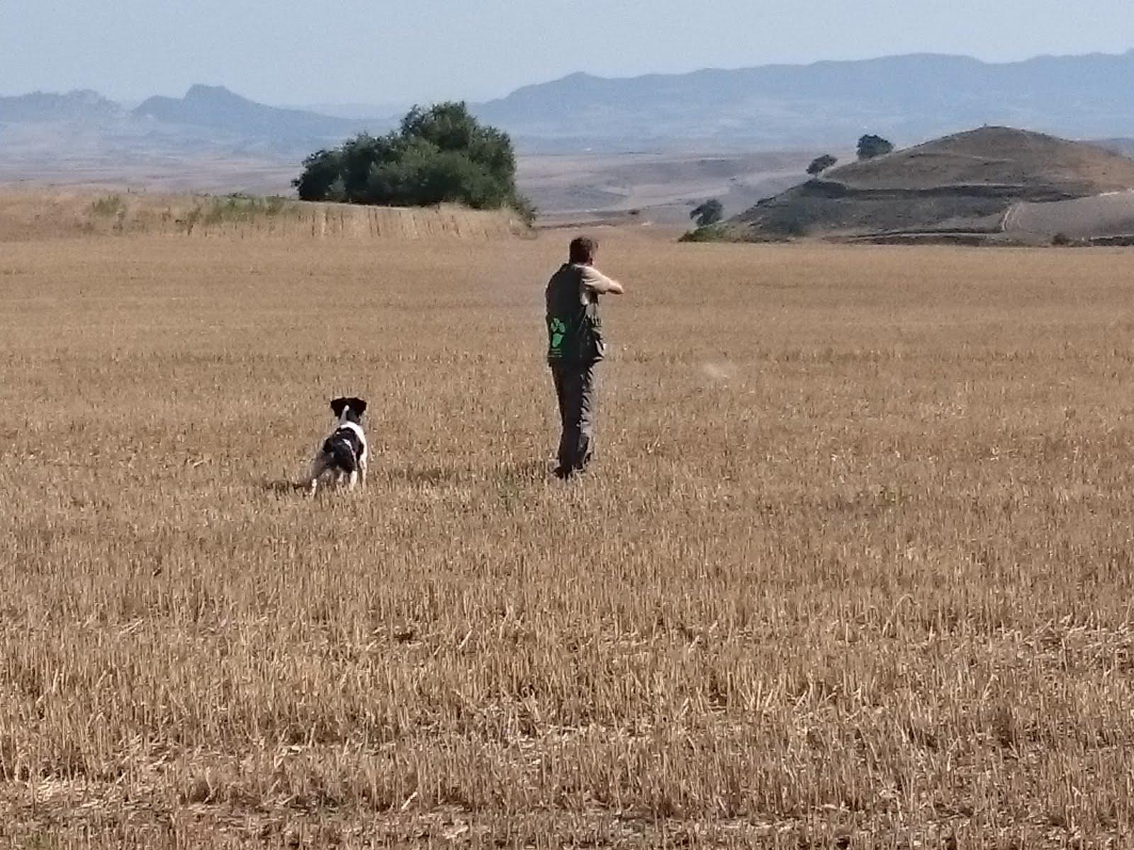 Entrenamiento junto a Fermín Hernández y su perro IRON respetando el vuelo y tiro en Coto de Burgos
