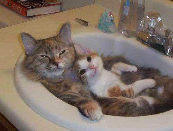 Funny cats - part 94 (40 pics + 10 gifs), cat pictures, kitten and cat sit on sink