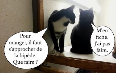 Un félix et une chatte noire.