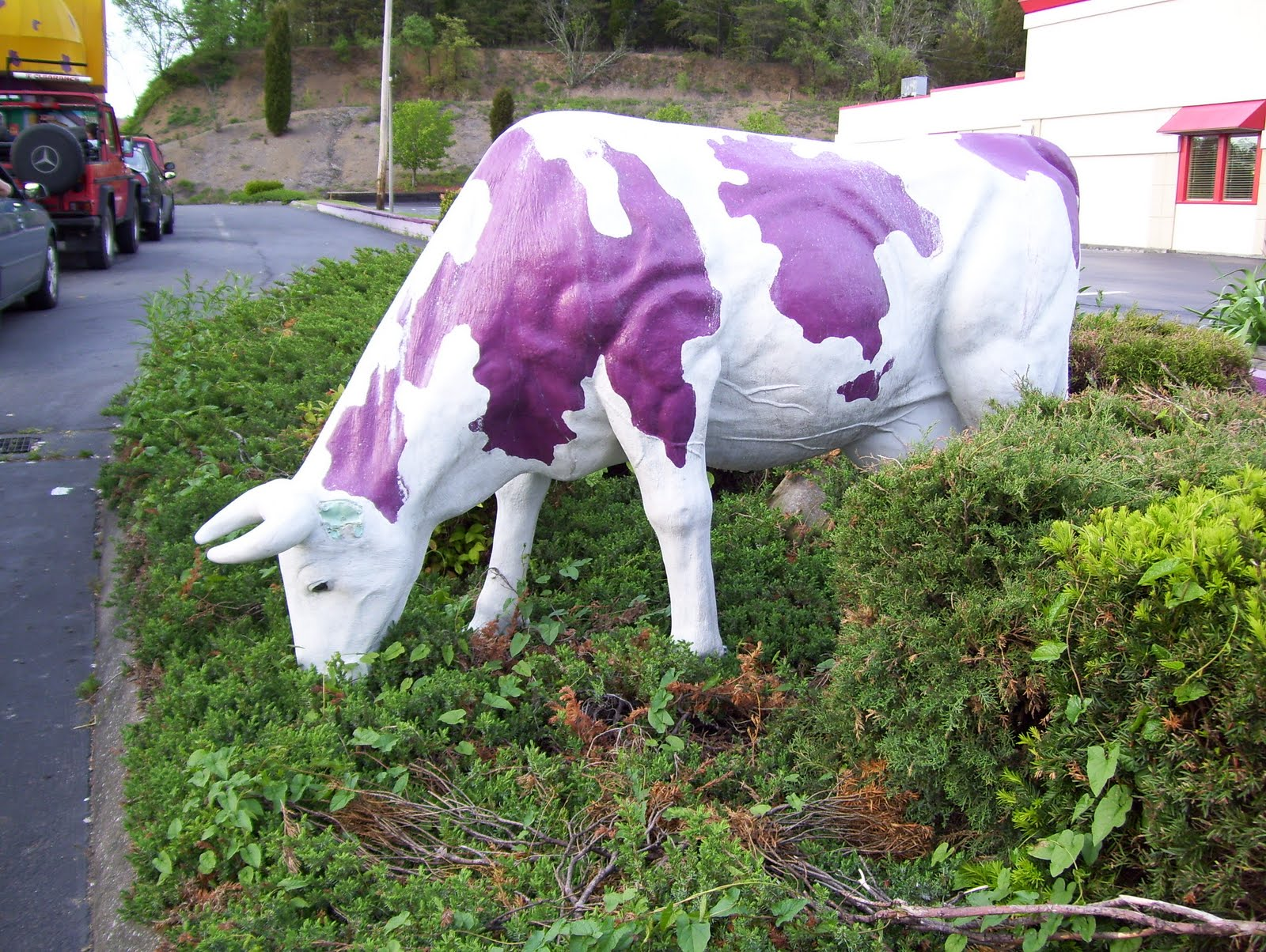 purple cow Purple clover is a site for people over 50 who have no sense of age explore how we live today, what we've learned from the past & how to navigate the future.