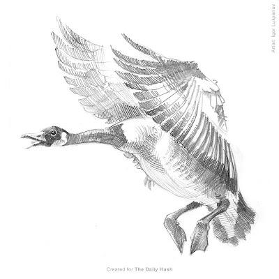 dessin d'une oie sauvage, image oiseau
