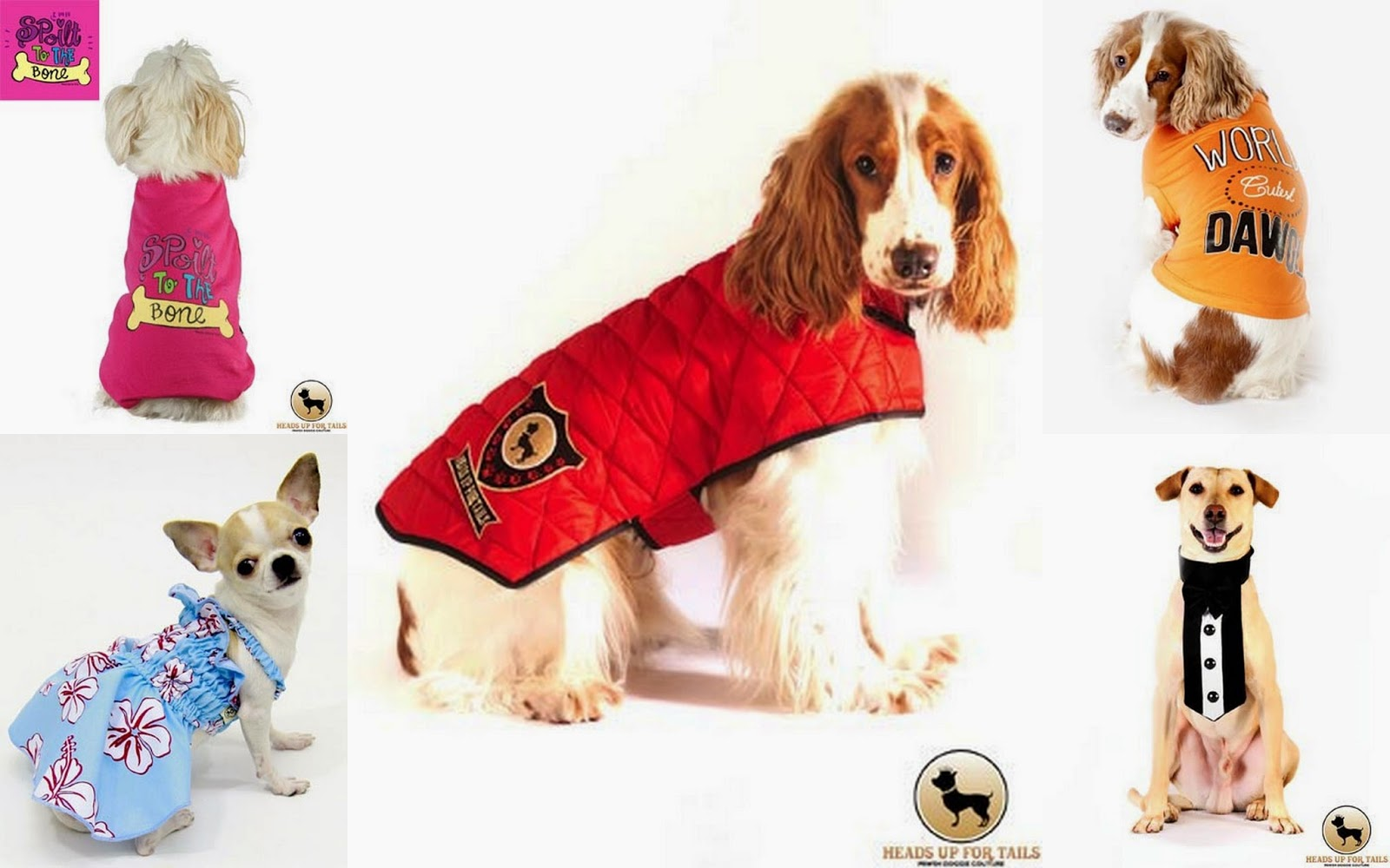 Dog, dog accessories, dog clothes, dog collar, dog food, dog toys, personalized dog collar, personalized dog name tag,dog raincoat s, dog jackets, dog food, dog vegetarian food, dogs wet food, dogs dry food, dogs tshirt , dogs perfumes, dogs shampoo, dogs accessories, dog soap , dog powder, dog conditioner, dog toys , dog shoes, dog beds, dog needs