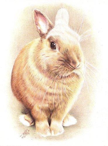 Nos petits freres les animaux les animaux prennent la pose - Lapin en dessin ...