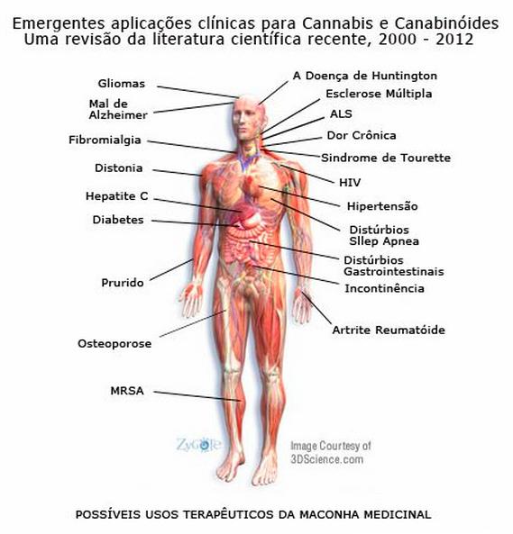 Emergentes aplicações clínicas da cannabis