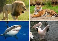 kelompok hewan pemakan daging atau hewan lain