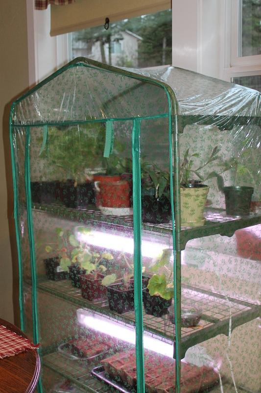 Indoor greenhouse diy 100 indoor greenhouse how to make for How to make a small indoor greenhouse