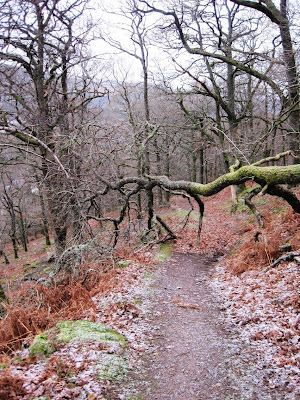 Near the end of the path up Craigendarroch, Deeside