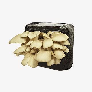 http://www.cantinhodasaromaticas.pt/loja/cogumelos/cultivo-de-repolgas-em-casa/