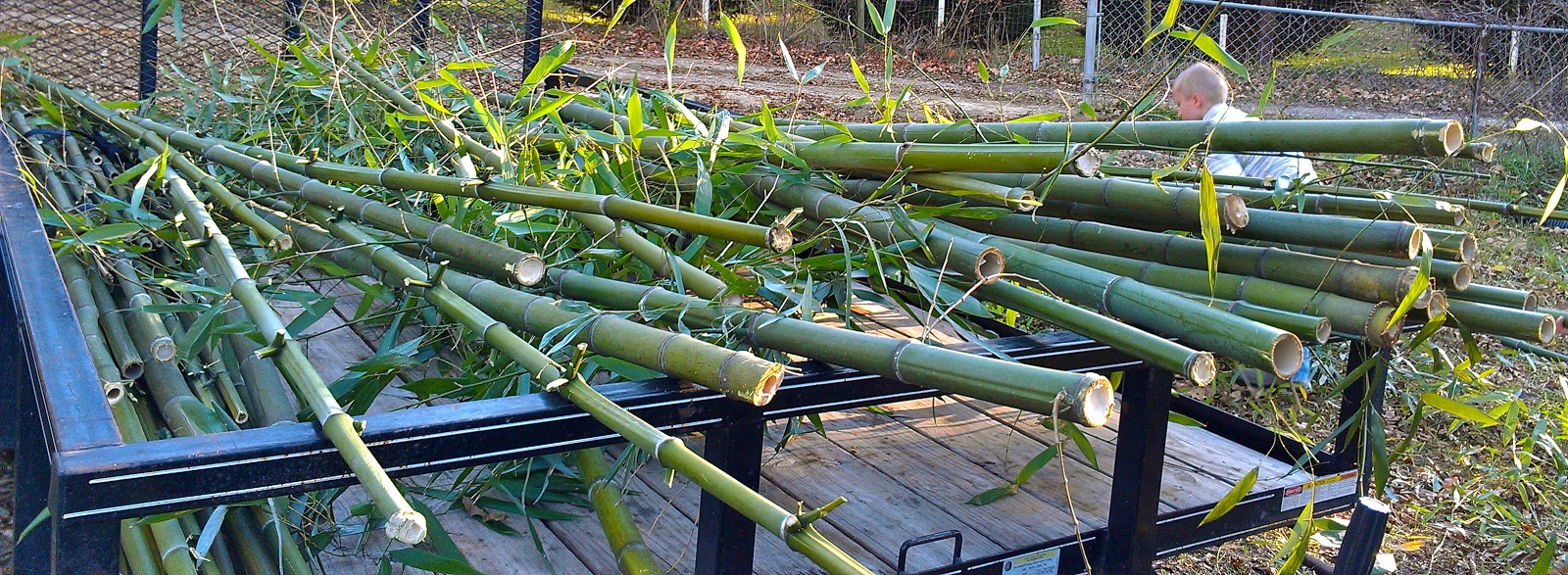 Its a boys life in the bamboo forest and now i am off to research diy bamboo fence ideas baanklon Image collections