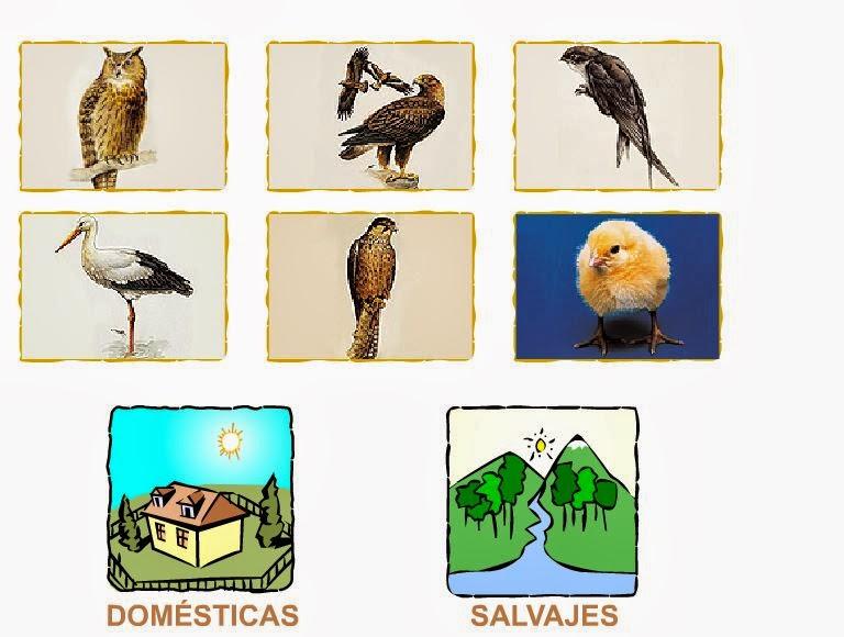 http://primerodecarlos.com/primerodecarlos.blogspot.com/enero/avesDS.swf