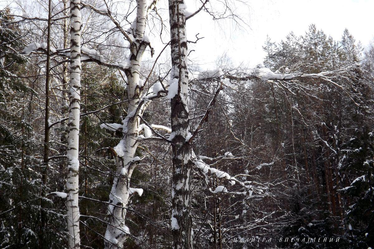 Зимний лес.  Зимнее очарование. Окрестности Ижевска. Блог Вся палитра впечатлений