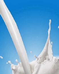 segelas susu bubuk kambing etawa