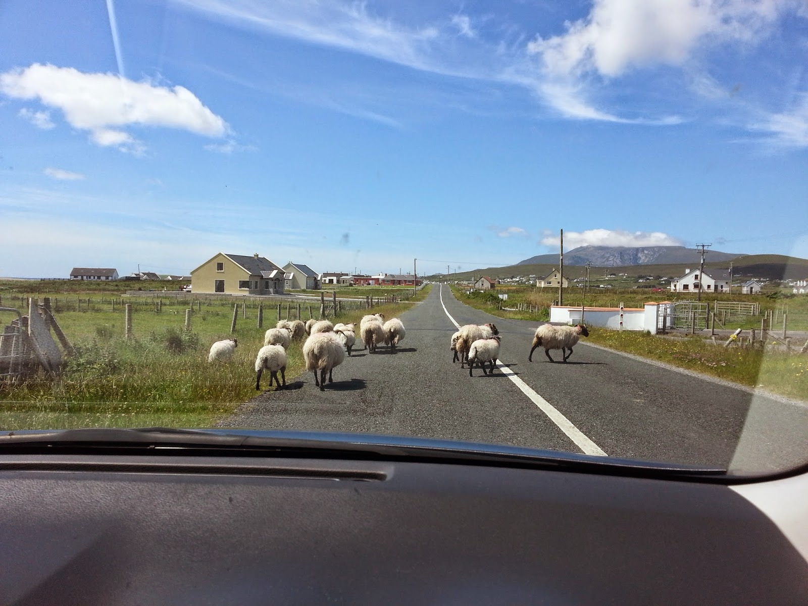 blackface sheep crossing road in west of ireland