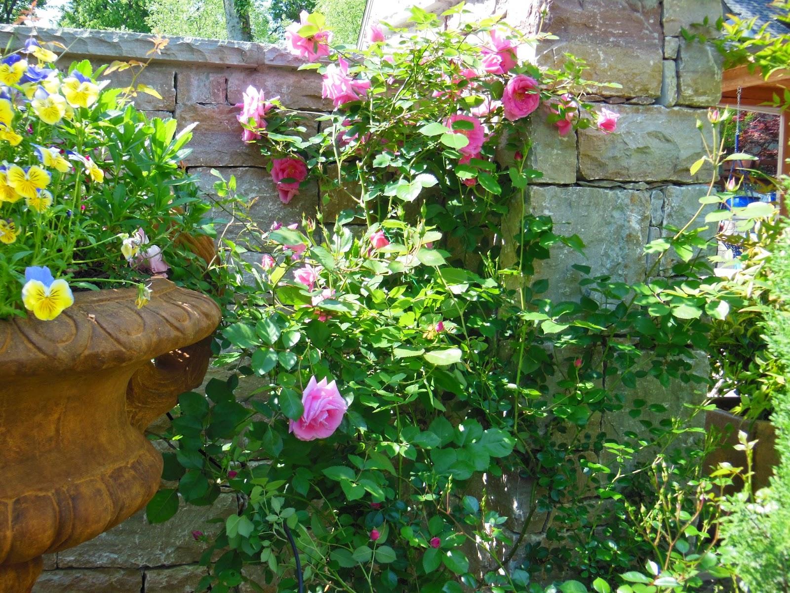 Irish cottage garden lavender blue garden design for Celtic garden designs