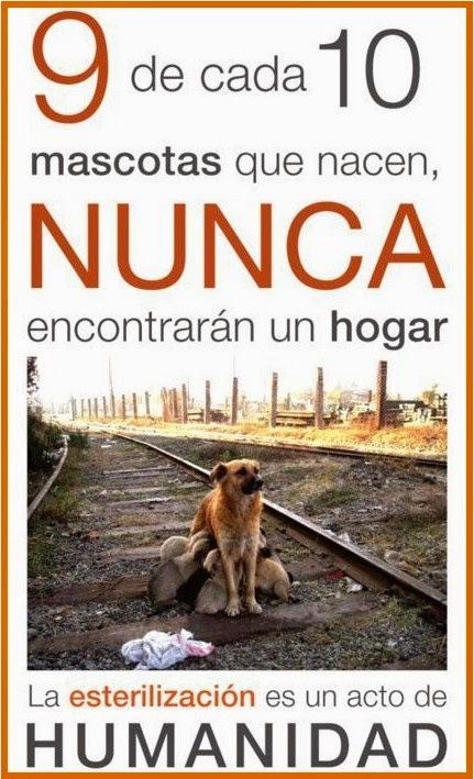campaña municipal gratuita de esterilización de canes