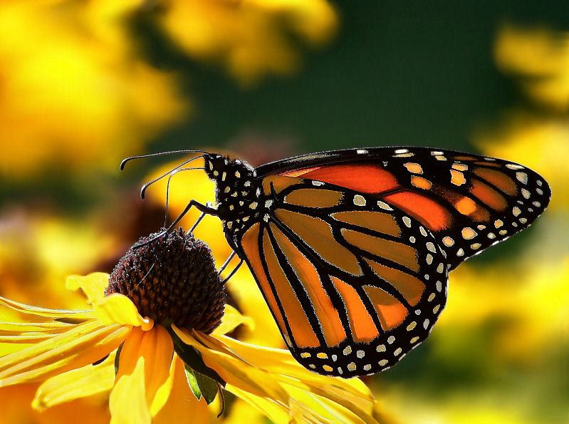 Beautiful natural scenery a butterfly perched on a flower for Butterfly in a flower