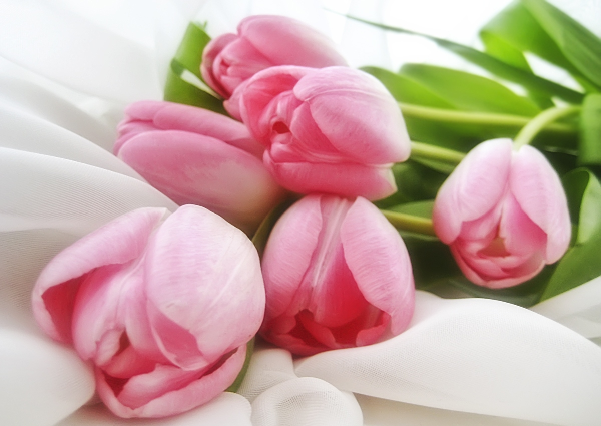 Group of lovely flowers gallery wallpapers images of lovely flowers flowers gallery izmirmasajfo