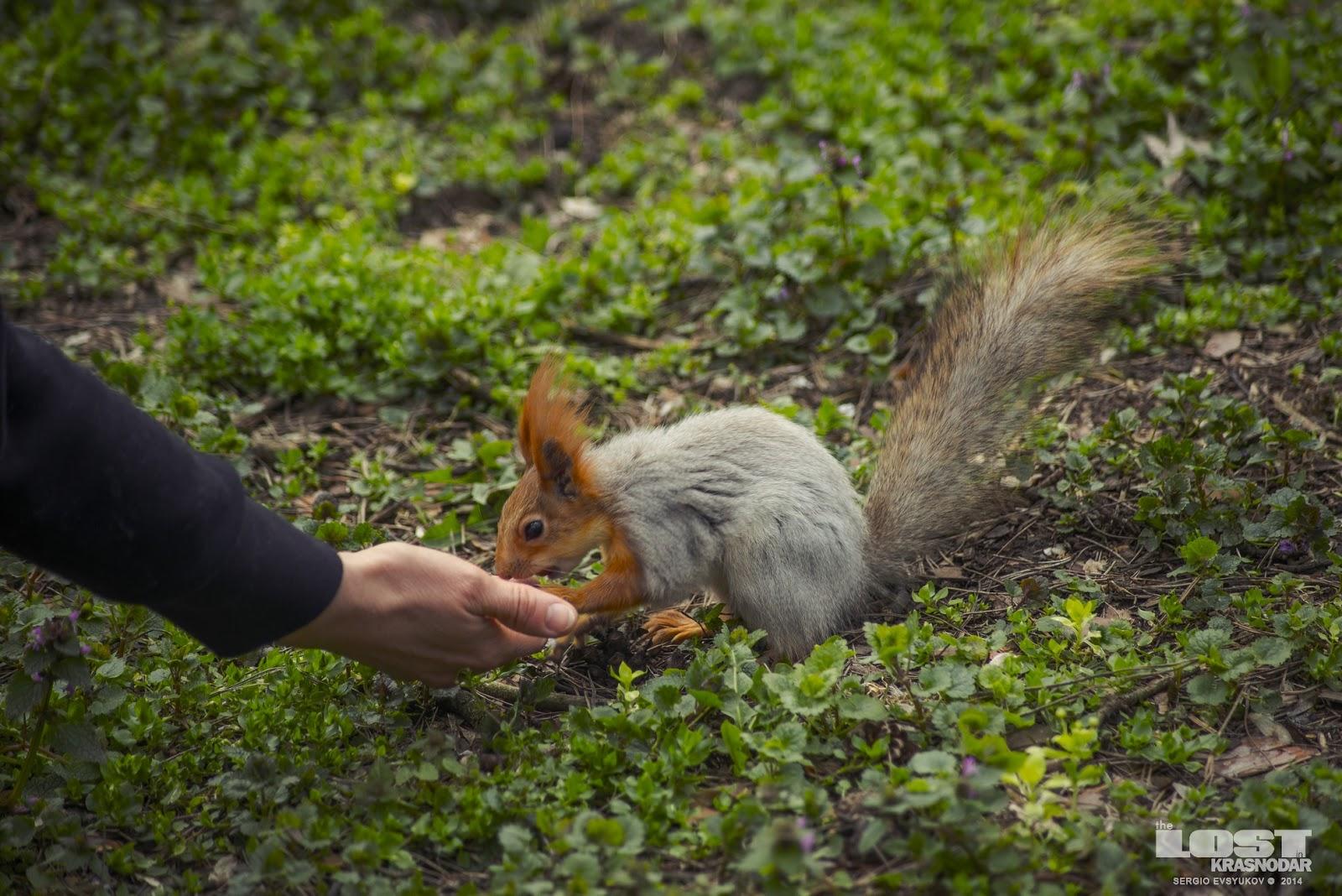 Squirrels in park