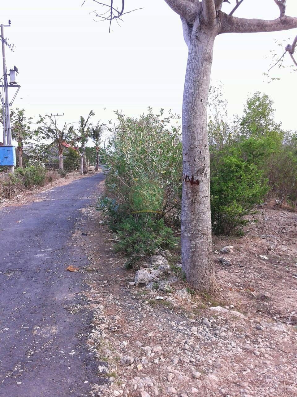 View dari Jalan Ke Lokasi