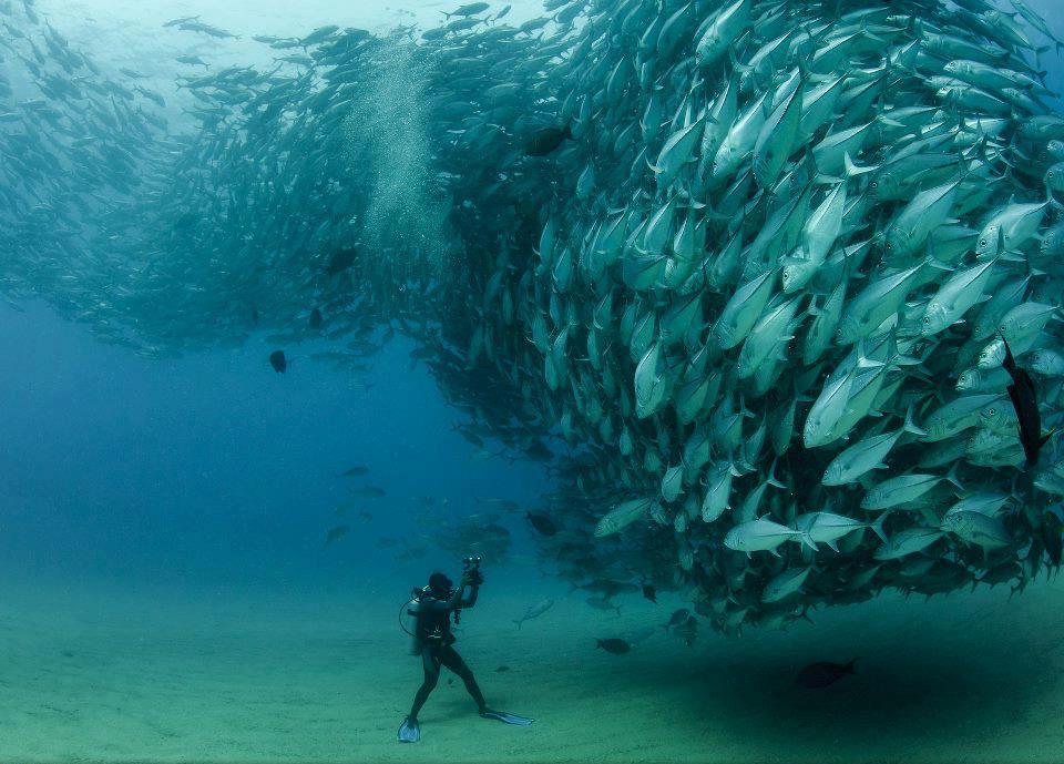 Fish Gang Undersea Amazing Scene