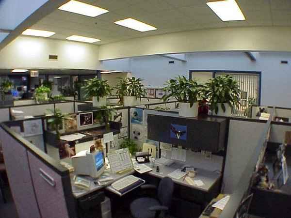 plants for office cubicle. Plants For Office Cubicle L
