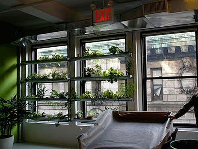 Decoraciones y modernidades jardines modernos para for Oficinas grupo tragaluz
