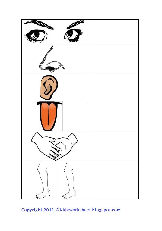 Kindergarten Science Worksheets Parts Body - body parts printables ...