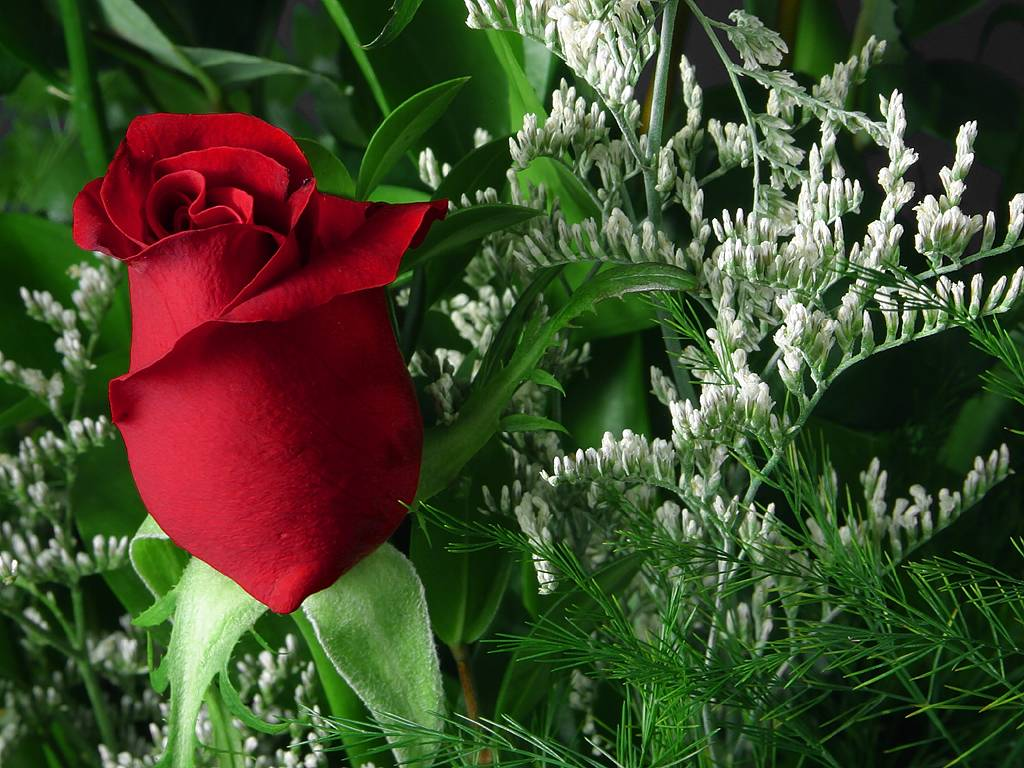 http://2.bp.blogspot.com/-ZRoYnjJXSW8/T2j5YIwr-bI/AAAAAAAAAxY/0R8ju9g7XdA/s1600/red-rose-flower-wallpaper-2.jpg