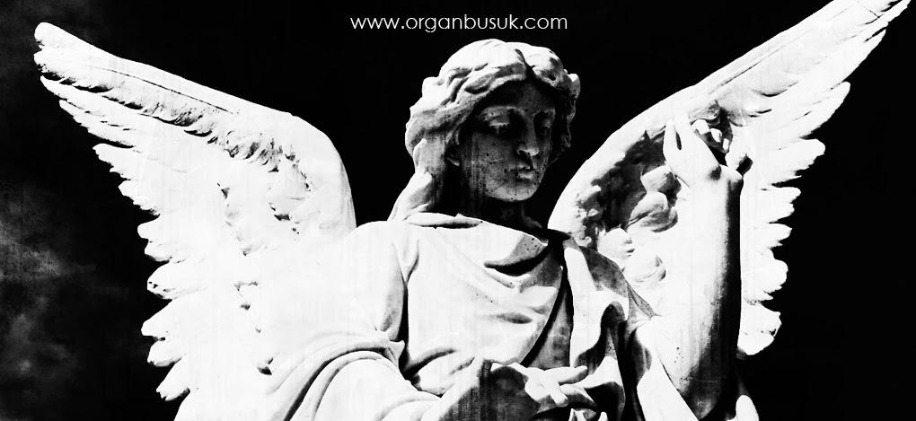 www.organbusuk.com | Organbusuk Official Webblog