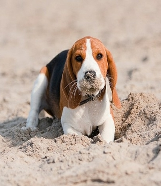 5 Dog Breeds That Dig The Most