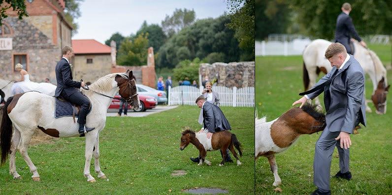 vestuvių fotosesija su arkliais pakruojo dvare