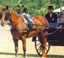 Horseback Riding in brunei