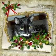 Merry Christmas Da Tabbies O Trout Towne and family!
