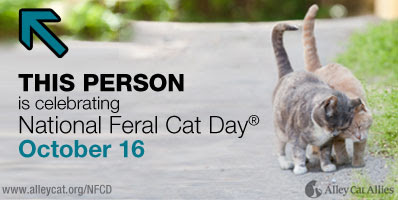 Anakin The Two legged cat supports National Feral Cat Day