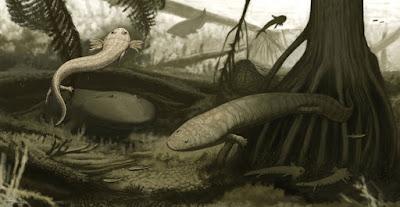 Duas novas espécies de anfíbios extintas são descobertas no Brasil