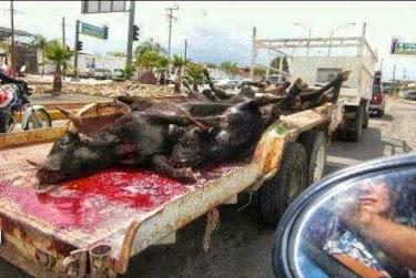 matanza, sangre, injusticia