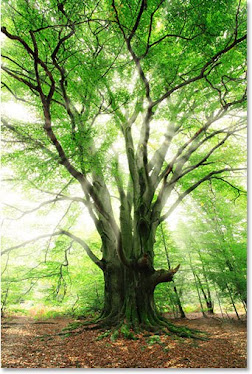 A Floresta Agradece