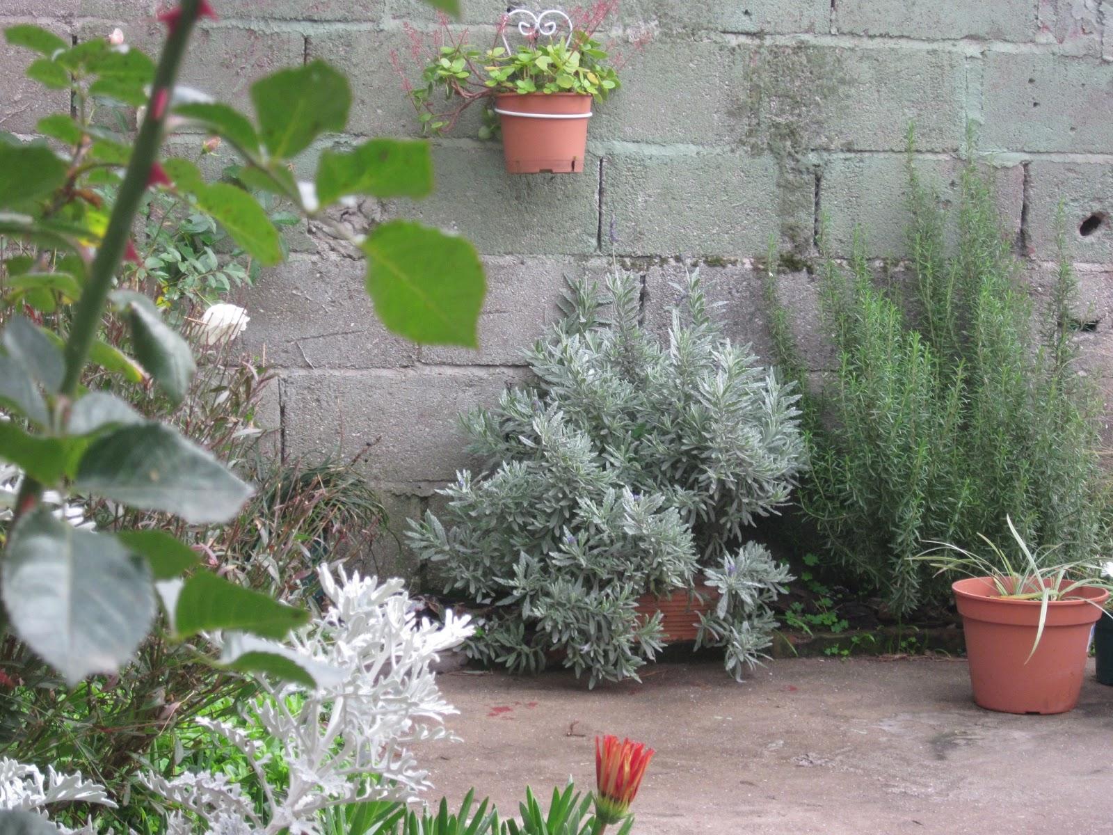En el medio del sendero mi jard n en invierno for Bloques de cemento para pisos de jardin