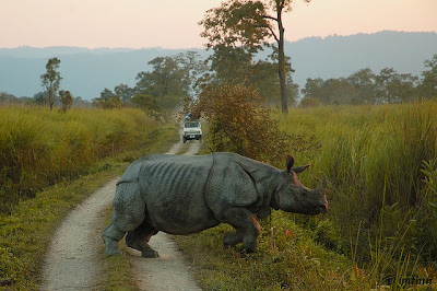 Kaziranga-National-Park, Assam-picture, wild-life-tour, adventure-trip