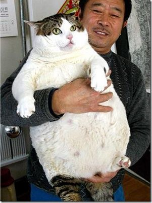 Top 5 Amazingly Fat Cats