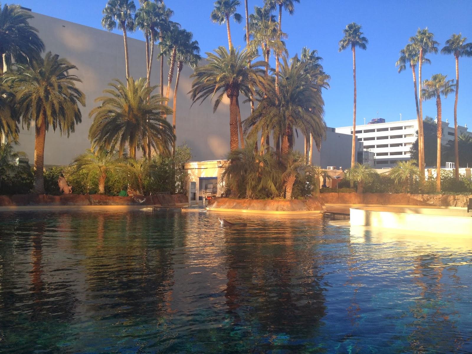 Tough Love Travel: Yoga with Dolphins in Las Vegas\' Secret Garden
