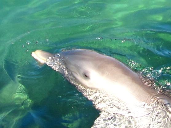 delfinashul
