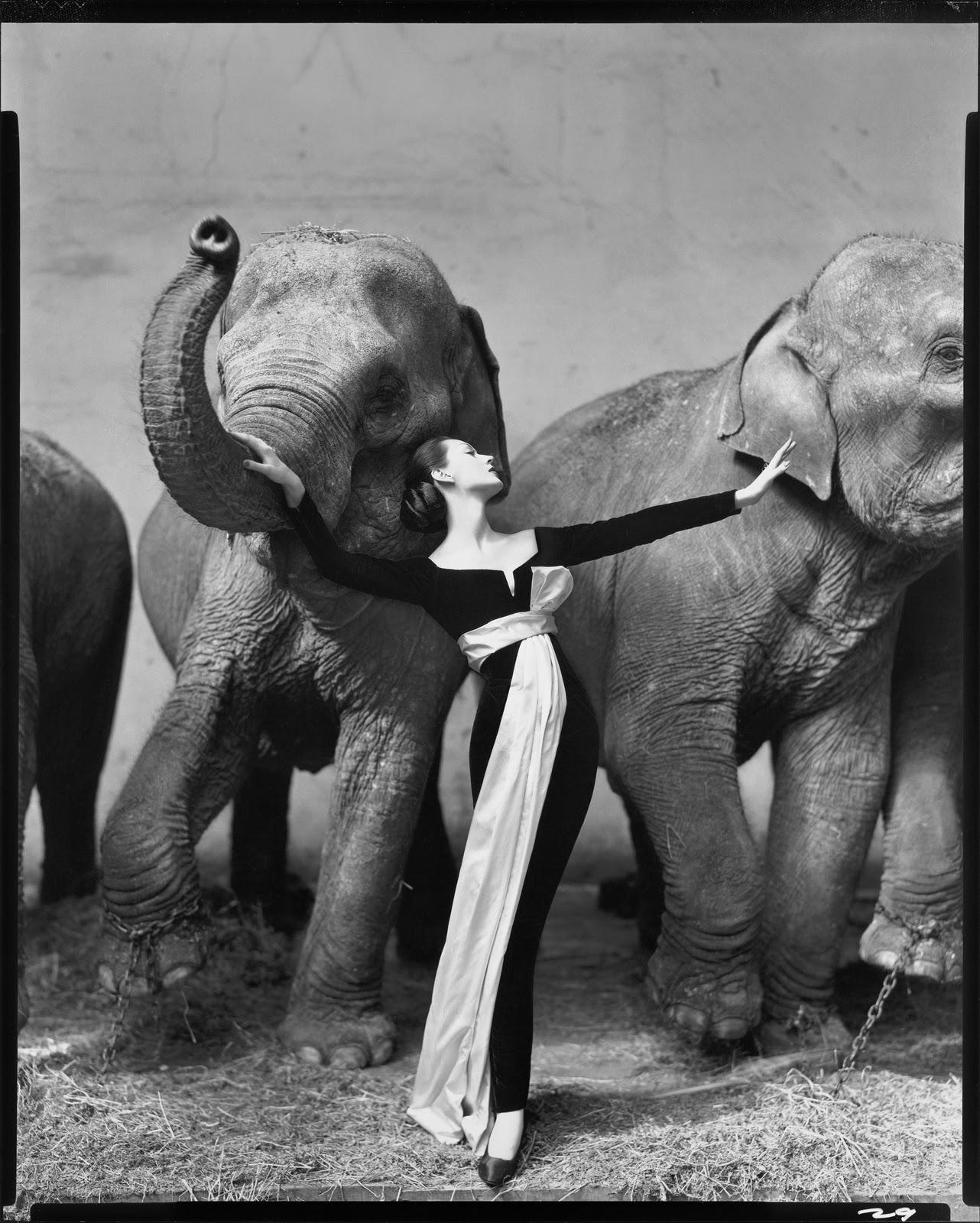 http://2.bp.blogspot.com/-ZUYZDQRXig8/TsqKohzT09I/AAAAAAAABHA/vdSG9yZ2meg/s1600/Dovima+with+Elephants%252C+Evening+Dress+by+Dior%252C+Cirque+d%25E2%2580%2599Hiver%252C+Paris%252C+August+1955..jpg