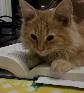 Rory the Book Club Cat