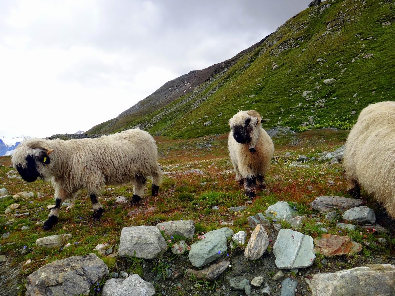 girl wanderlist: from nyc to herding sheep in switzerland