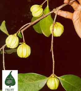 Ultra garcinia terms and conditions