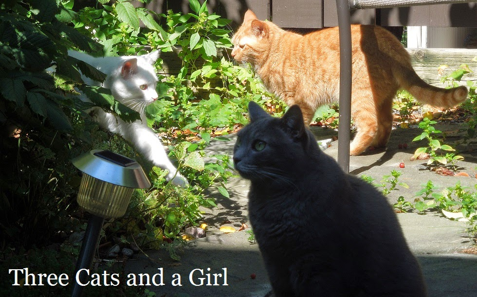 Three Cats and a Girl