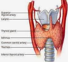 penyakit hipertiroid