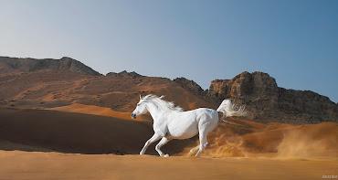 #11 Horse Wallpaper