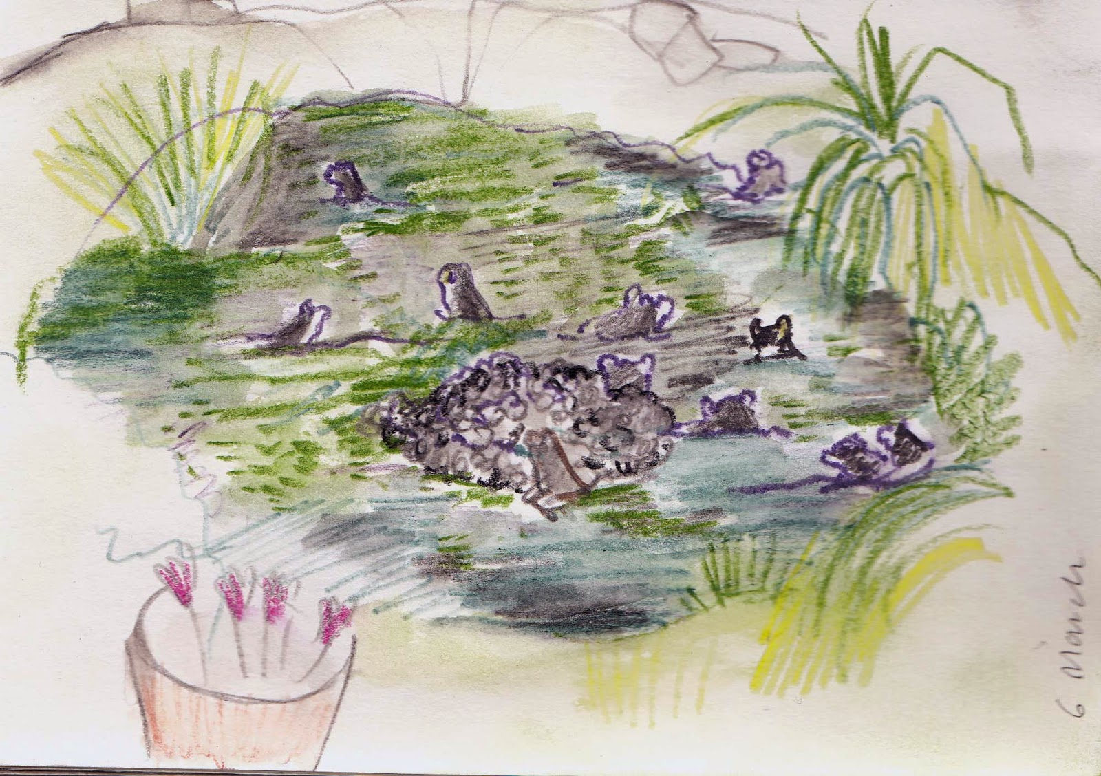 London Gardening Under Difficulty Sketch Of The Frogs In